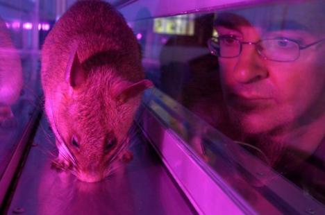 HeroRAT Sniffing for TB